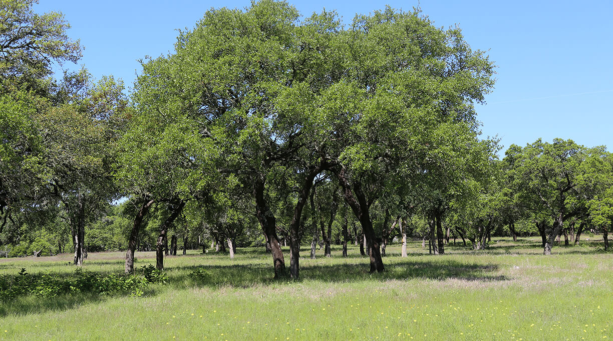 Blanco Ranch Property